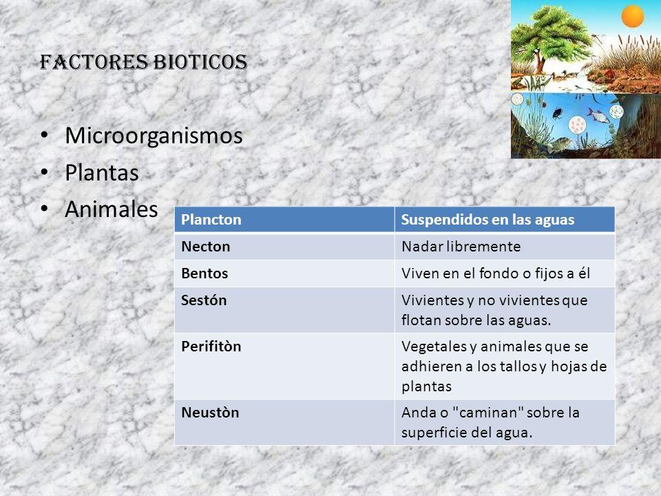 FACTORES BIOTICOS Microorganismos Plantas Animales PlanctonSuspendidos en las aguas NectonNadar libremente BentosViven en el fondo o fijos a él Sestón