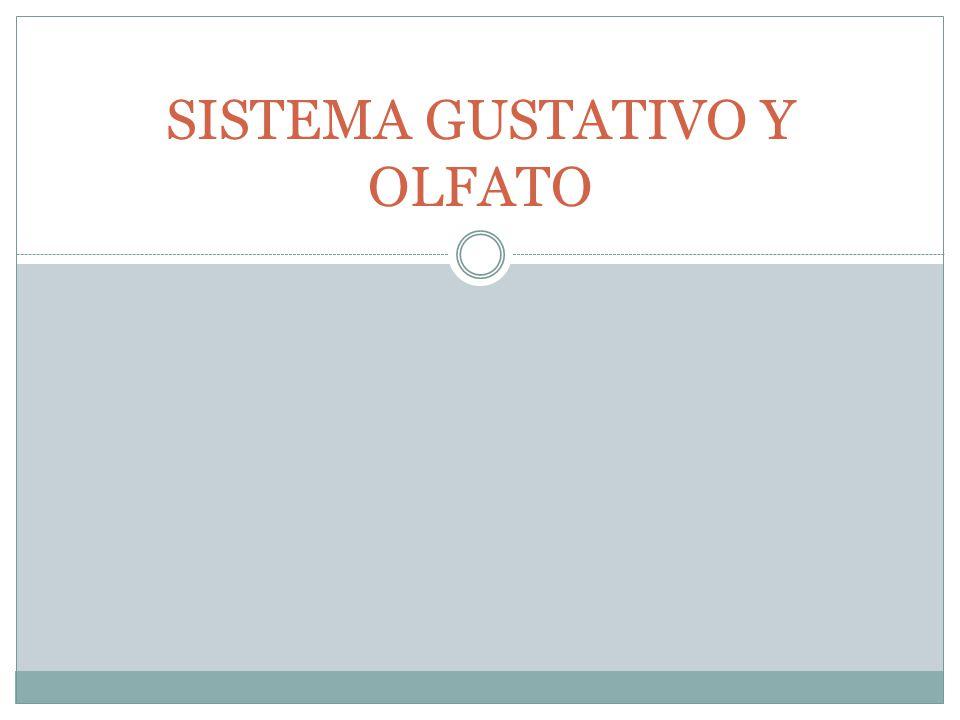 ESTORNUDO LA MUCOSA OLFATIVA TAMBIEN CONTIENE FIBRAS SENSITIVAS PROCEDENTE DEL V NERVIO CRANEAL (TRIGEMINO) SENSIBLES A LOS IRRITANTES Y ALGUNAS SUSTANCIAS OLOROSAS COMO LA MENTA Y EL CLORO
