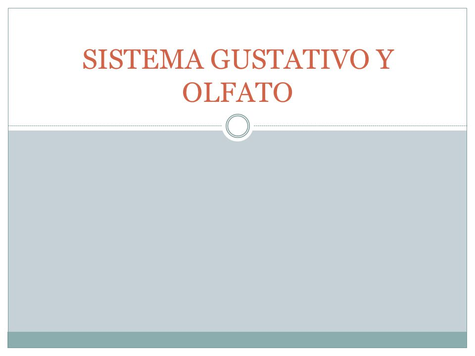 SISTEMA GUSTATIVO Y OLFATO