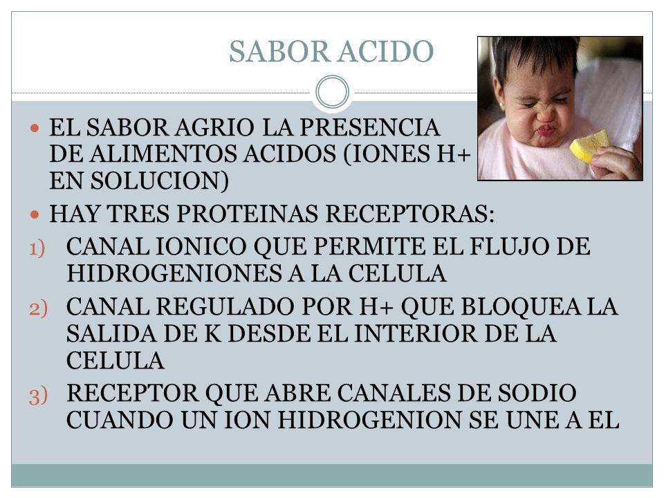 SABOR ACIDO EL SABOR AGRIO LA PRESENCIA DE ALIMENTOS ACIDOS (IONES H+ EN SOLUCION) HAY TRES PROTEINAS RECEPTORAS: 1) CANAL IONICO QUE PERMITE EL FLUJO DE HIDROGENIONES A LA CELULA 2) CANAL REGULADO POR H+ QUE BLOQUEA LA SALIDA DE K DESDE EL INTERIOR DE LA CELULA 3) RECEPTOR QUE ABRE CANALES DE SODIO CUANDO UN ION HIDROGENION SE UNE A EL