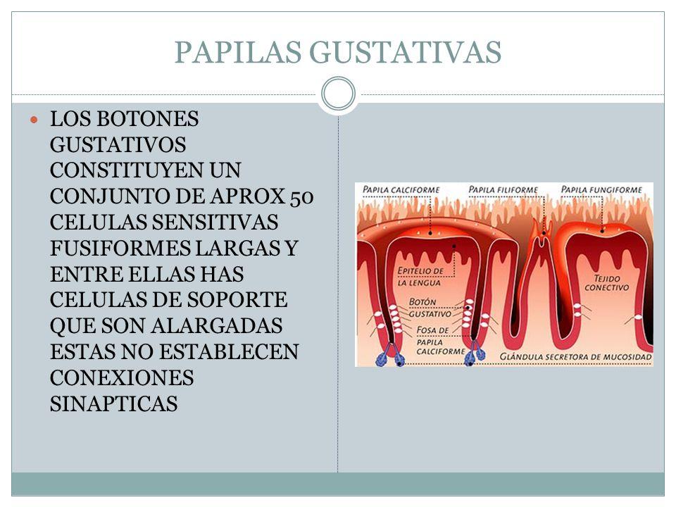 ESTORNUDO EL CEREBRO ACTIVA LOS MUSCULOS FARINGEOS, DE LA TRAQUEA Y DEL TORAX PARA EXPULSAR UN GRAN VOLUMEN DE AIRE DESDE LOS PULMONES, LA NARIZ Y LA BOCA.