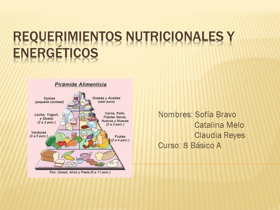 Para vivir es necesaria la energía; y esta energía se obtiene de los alimentos, y se mide en forma de calorías.