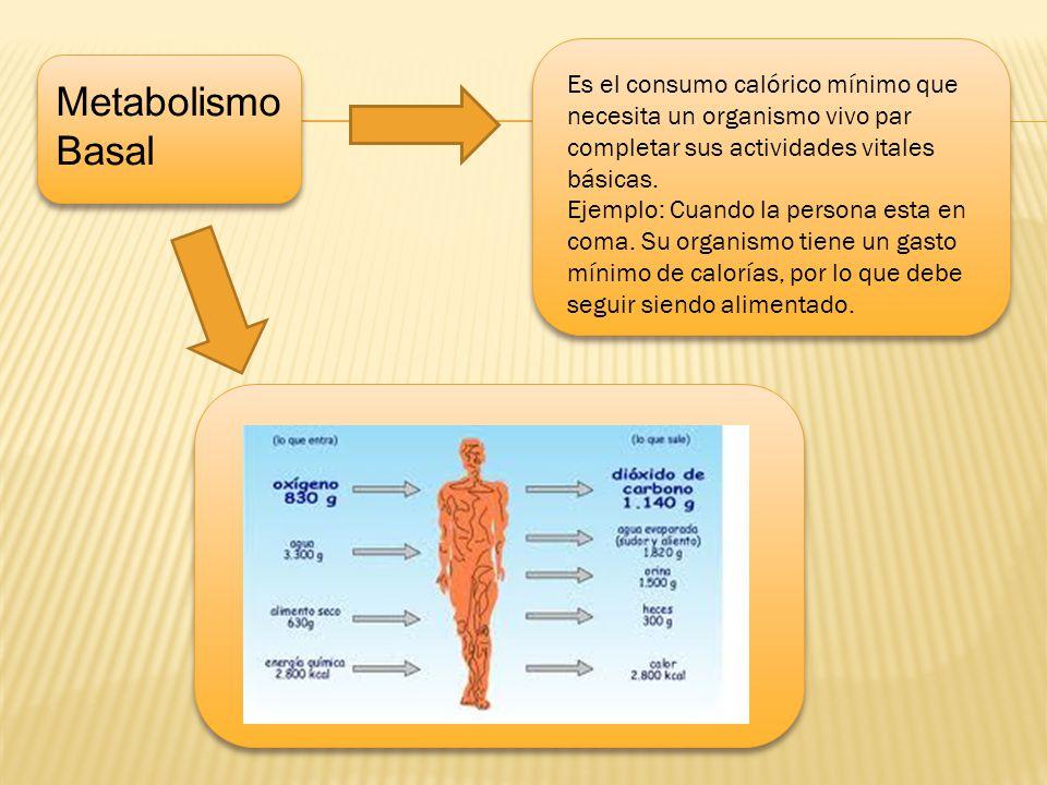 d Metabolismo Basal Es el consumo calórico mínimo que necesita un organismo vivo par completar sus actividades vitales básicas. Ejemplo: Cuando la per