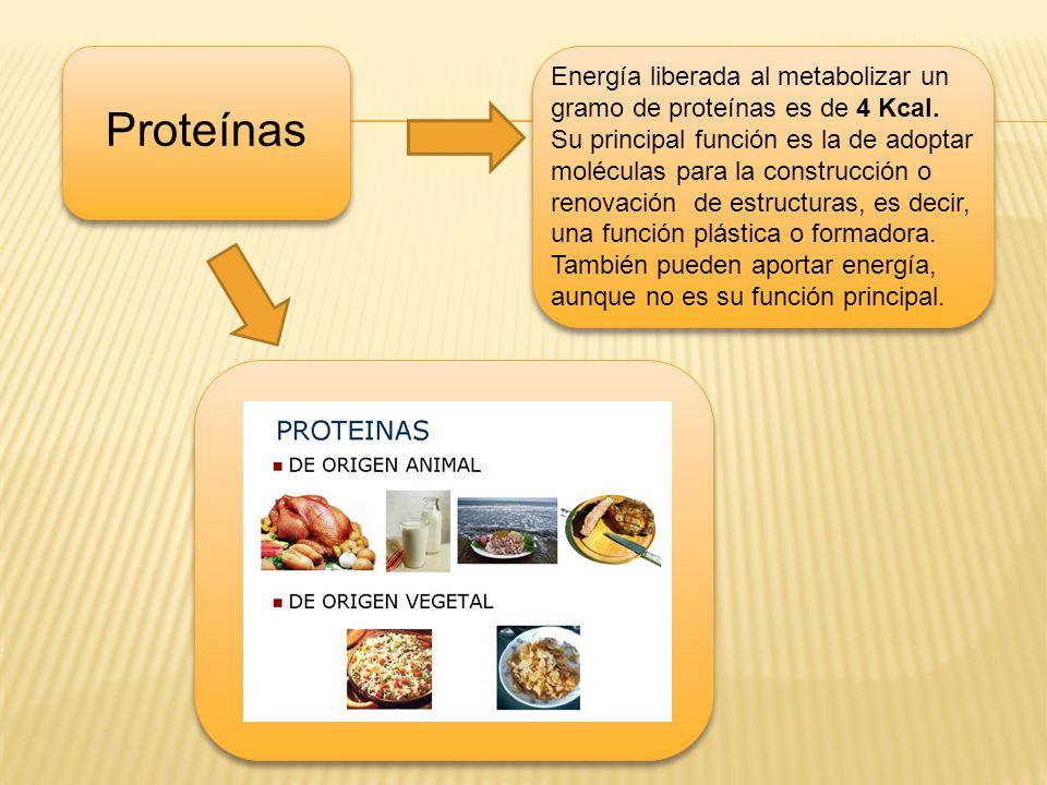 Proteínas Energía liberada al metabolizar un gramo de proteínas es de 4 Kcal. Su principal función es la de adoptar moléculas para la construcción o r