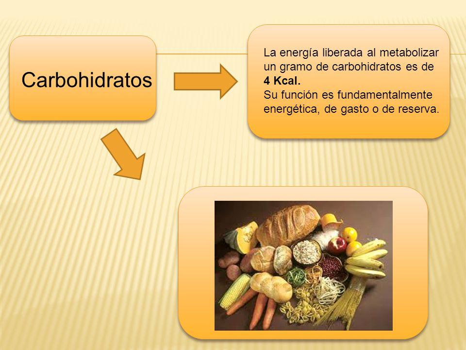 Carbohidratos La energía liberada al metabolizar un gramo de carbohidratos es de 4 Kcal. Su función es fundamentalmente energética, de gasto o de rese
