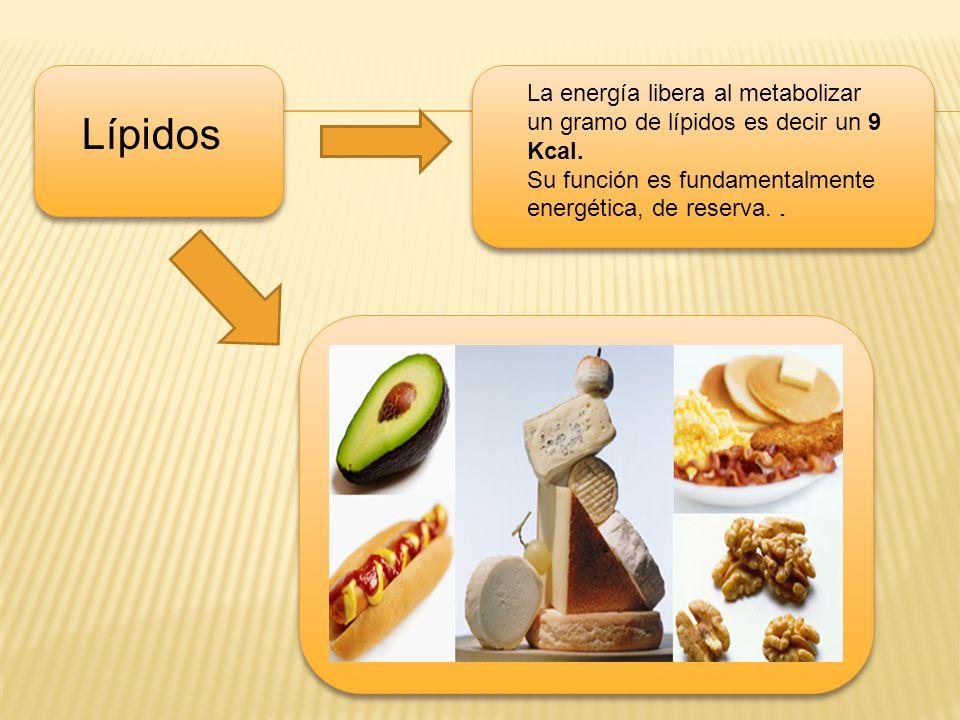 Lípidos La energía libera al metabolizar un gramo de lípidos es decir un 9 Kcal. Su función es fundamentalmente energética, de reserva..