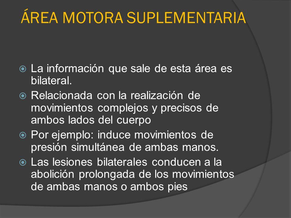 ÁREA MOTORA SUPLEMENTARIA La información que sale de esta área es bilateral. Relacionada con la realización de movimientos complejos y precisos de amb