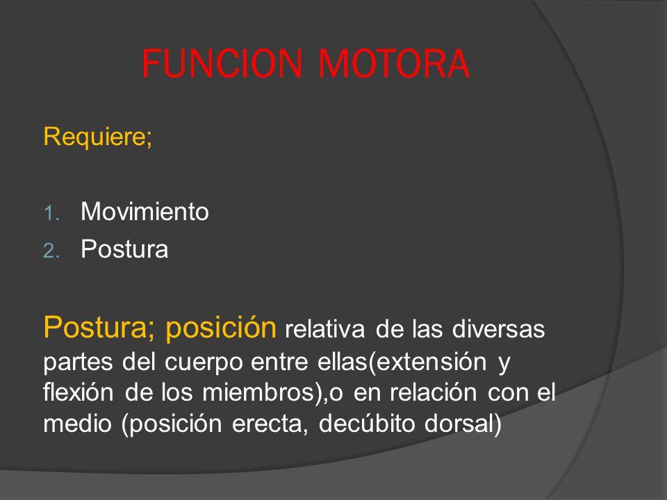 FUNCION MOTORA Requiere; 1. Movimiento 2. Postura Postura; posición relativa de las diversas partes del cuerpo entre ellas(extensión y flexión de los
