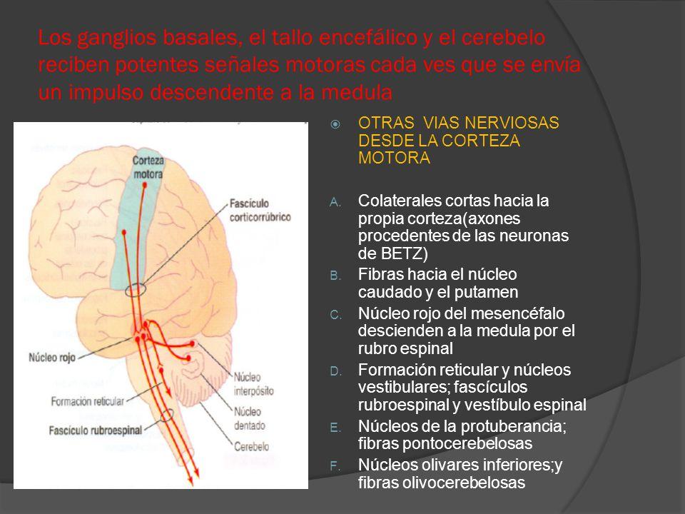Los ganglios basales, el tallo encefálico y el cerebelo reciben potentes señales motoras cada ves que se envía un impulso descendente a la medula OTRA