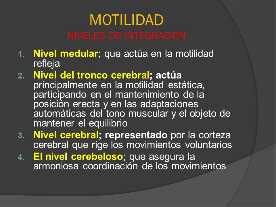 MOTILIDAD NIVELES DE INTEGRACION 1. Nivel medular; que actúa en la motilidad refleja 2. Nivel del tronco cerebral; actúa principalmente en la motilida