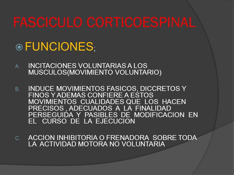 FASCICULO CORTICOESPINAL FUNCIONES ; A. INCITACIONES VOLUNTARIAS A LOS MUSCULOS(MOVIMIENTO VOLUNTARIO) B. INDUCE MOVIMIENTOS FASICOS, DICCRETOS Y FINO