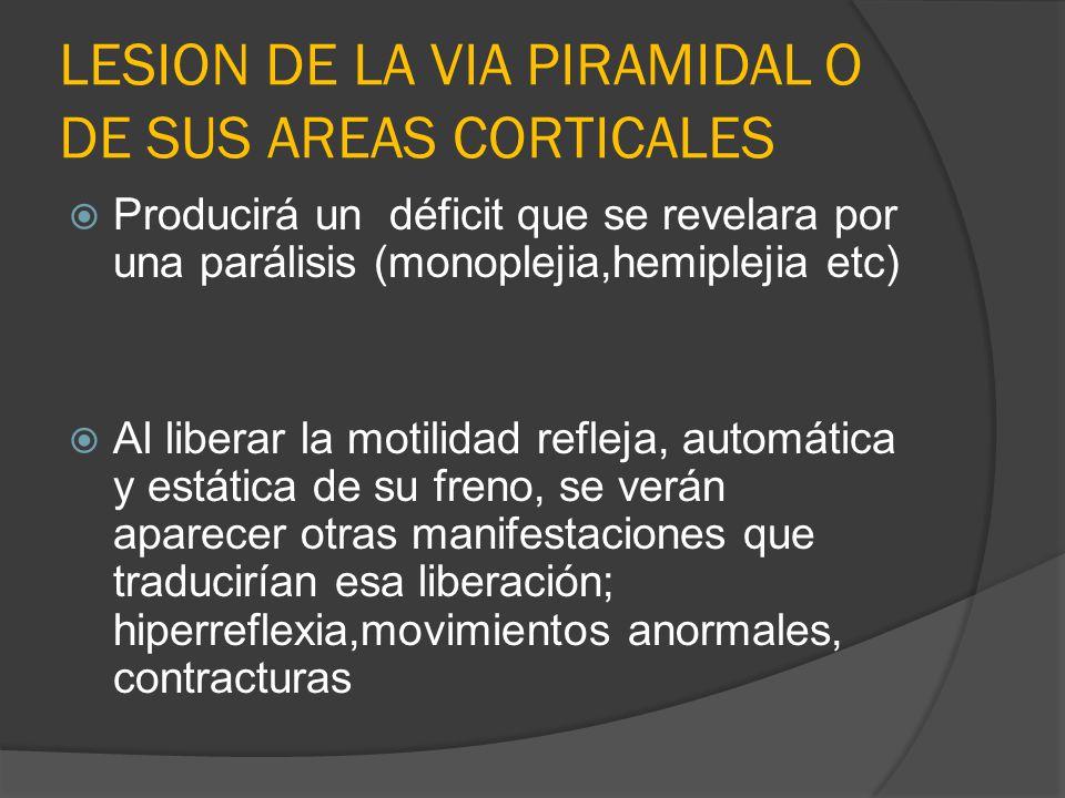 LESION DE LA VIA PIRAMIDAL O DE SUS AREAS CORTICALES Producirá un déficit que se revelara por una parálisis (monoplejia,hemiplejia etc) Al liberar la