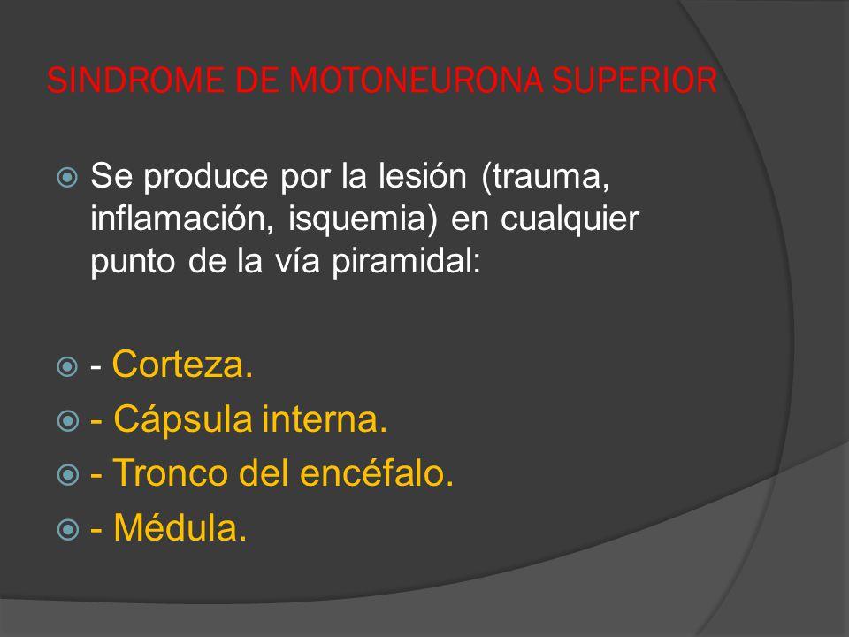 SINDROME DE MOTONEURONA SUPERIOR Se produce por la lesión (trauma, inflamación, isquemia) en cualquier punto de la vía piramidal: - Corteza. - Cápsula
