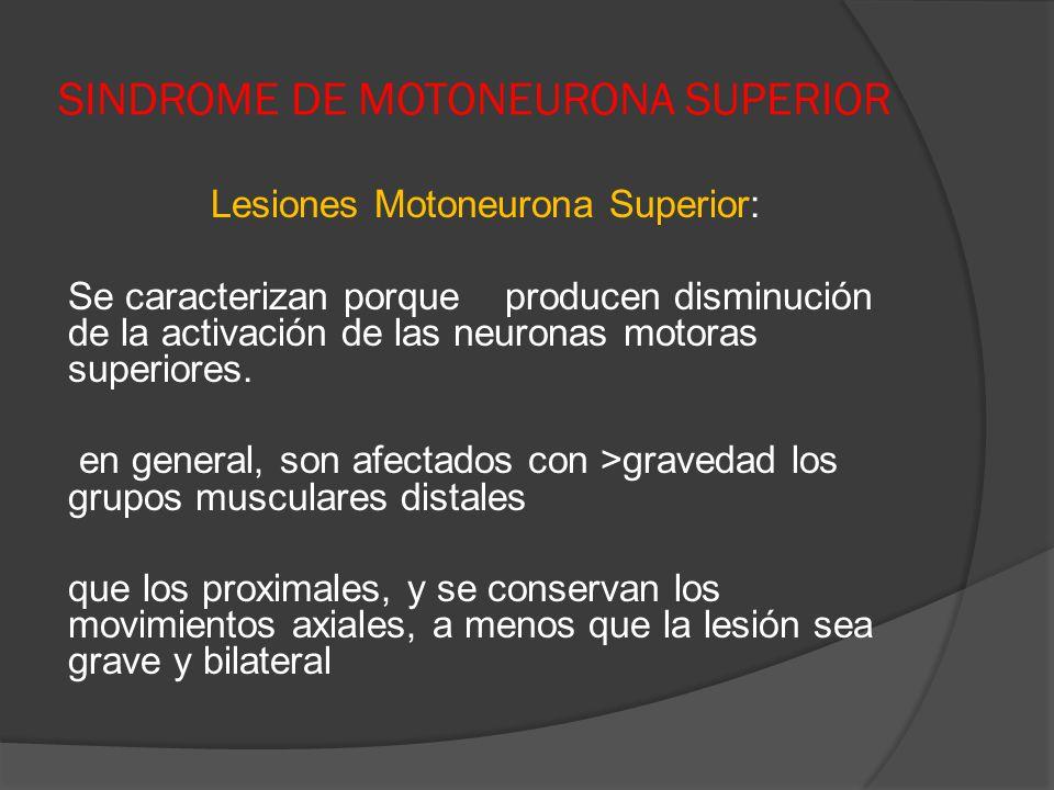 SINDROME DE MOTONEURONA SUPERIOR Lesiones Motoneurona Superior: Se caracterizan porque producen disminución de la activación de las neuronas motoras s