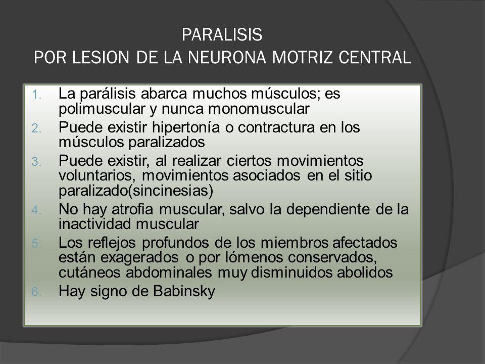PARALISIS POR LESION DE LA NEURONA MOTRIZ CENTRAL 1. La parálisis abarca muchos músculos; es polimuscular y nunca monomuscular 2. Puede existir hipert