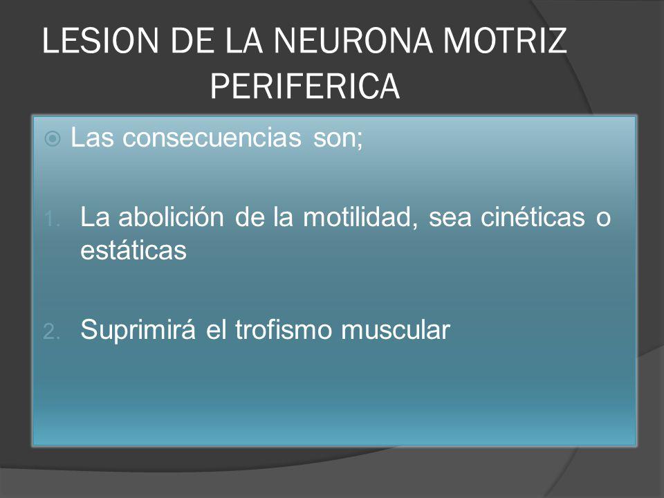 LESION DE LA NEURONA MOTRIZ PERIFERICA Las consecuencias son; 1. La abolición de la motilidad, sea cinéticas o estáticas 2. Suprimirá el trofismo musc