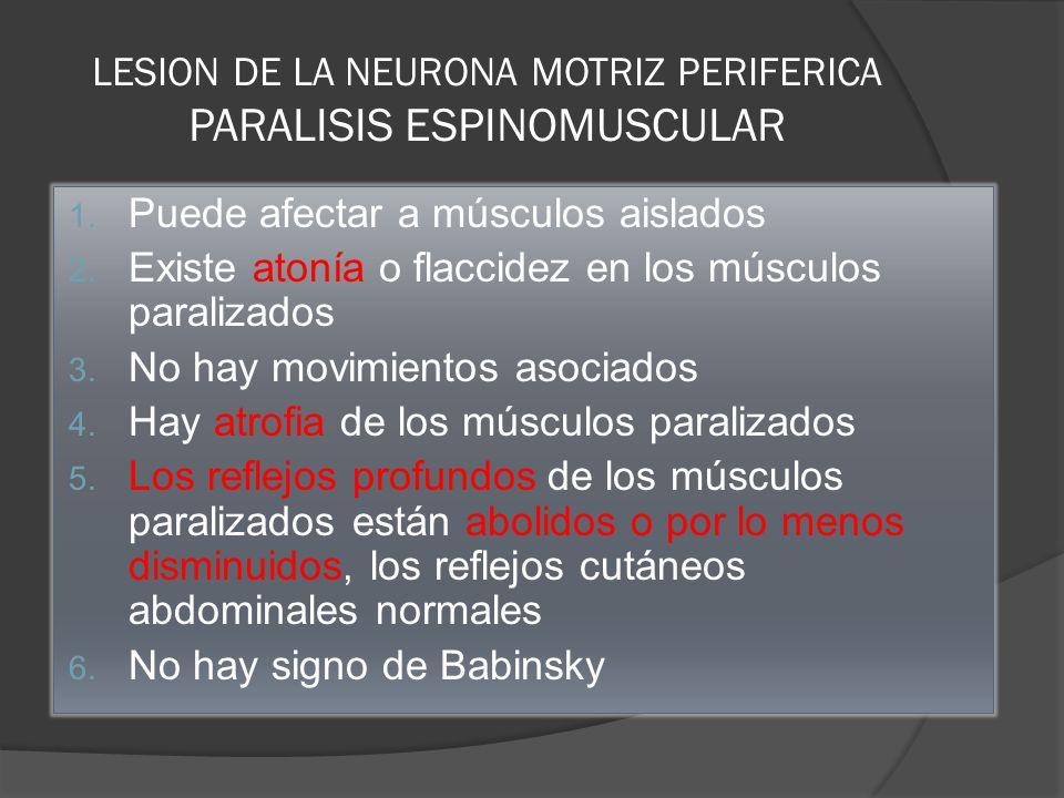 LESION DE LA NEURONA MOTRIZ PERIFERICA PARALISIS ESPINOMUSCULAR 1. Puede afectar a músculos aislados 2. Existe atonía o flaccidez en los músculos para