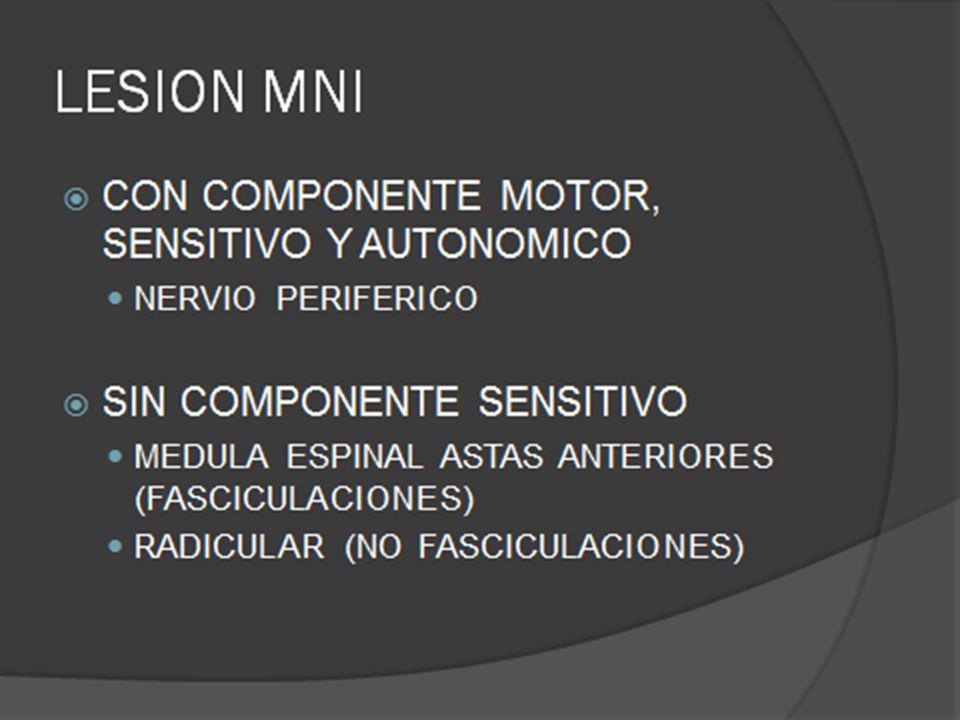 SINDROME DE MOTONEURONA INFERIOR Las lesiones medulares mas comunes son: 1.