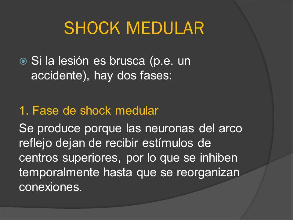 SHOCK MEDULAR Si la lesión es brusca (p.e. un accidente), hay dos fases: 1. Fase de shock medular Se produce porque las neuronas del arco reflejo deja