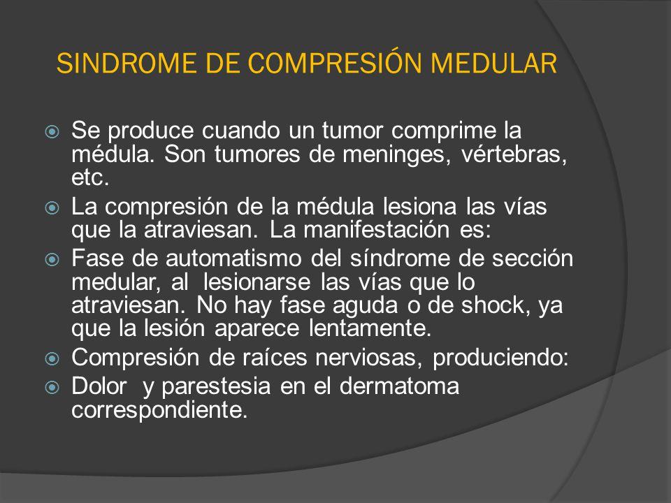 SINDROME DE COMPRESIÓN MEDULAR Se produce cuando un tumor comprime la médula. Son tumores de meninges, vértebras, etc. La compresión de la médula lesi