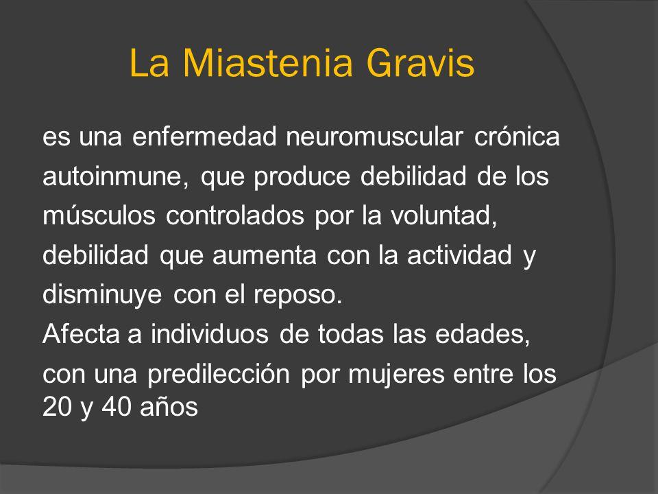 La Miastenia Gravis es una enfermedad neuromuscular crónica autoinmune, que produce debilidad de los músculos controlados por la voluntad, debilidad q