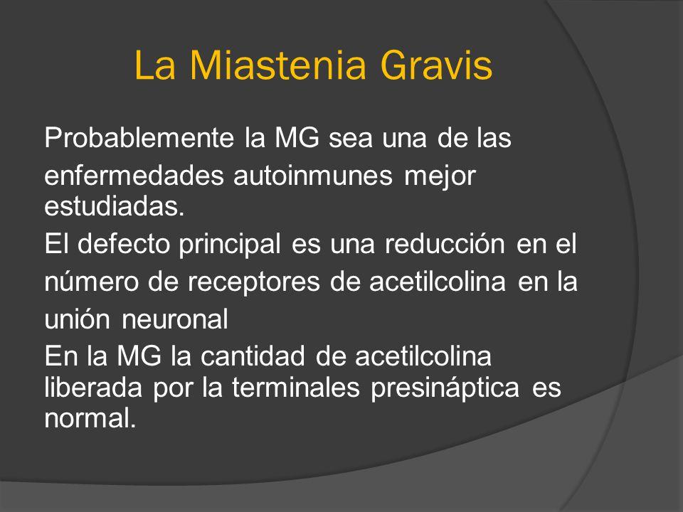 La Miastenia Gravis Probablemente la MG sea una de las enfermedades autoinmunes mejor estudiadas. El defecto principal es una reducción en el número d
