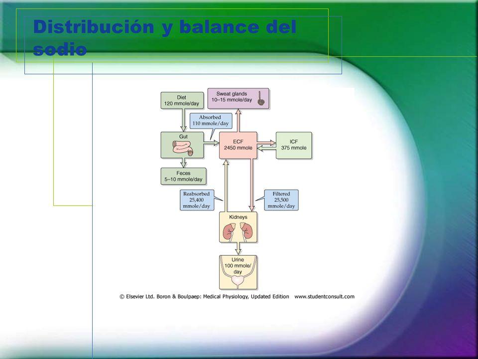 Distribución y balance del sodio