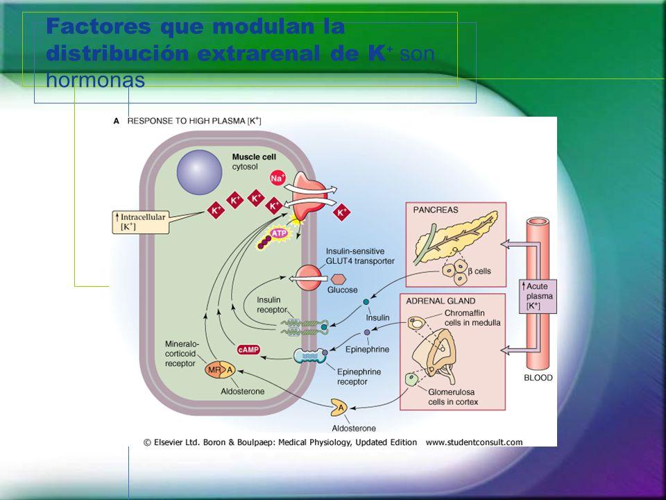 Factores que modulan la distribución extrarenal de K son hormonas