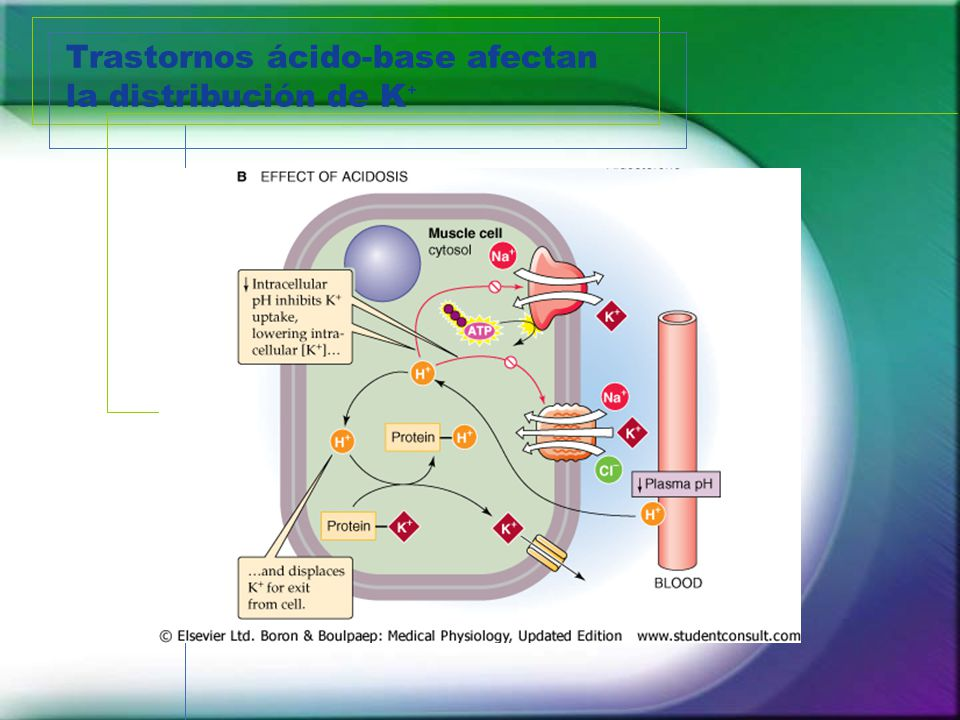 Trastornos ácido-base afectan la distribución de K