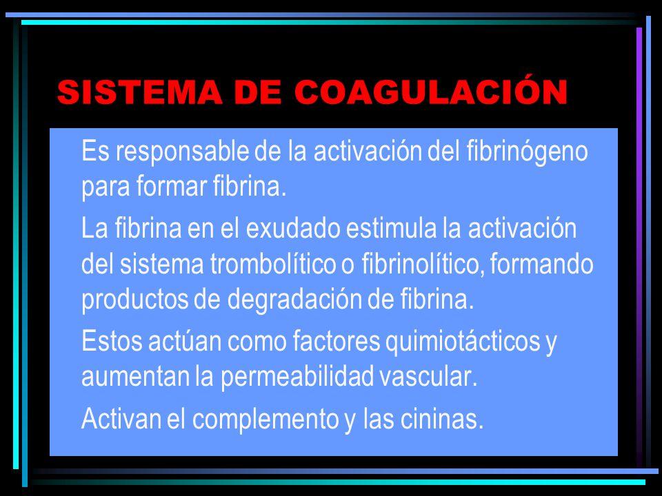 SISTEMA DE COAGULACIÓN Es responsable de la activación del fibrinógeno para formar fibrina. La fibrina en el exudado estimula la activación del sistem