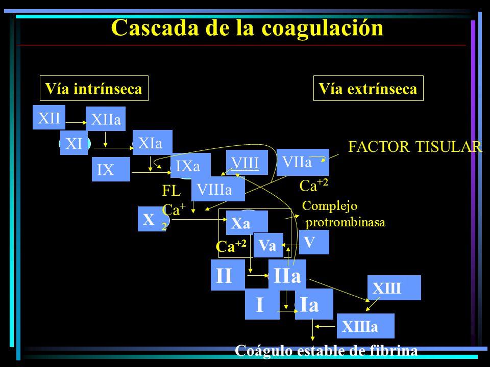 Cascada de la coagulación XII XIIa XI XIa X Xa II IIa I Ia FL Ca + 2 VIIa FACTOR TISULAR Vía intrínsecaVía extrínseca Coágulo estable de fibrina Complejo protrombinasa Ca +2 Va V XIIIa XIII IX IXa VIIIa VIII