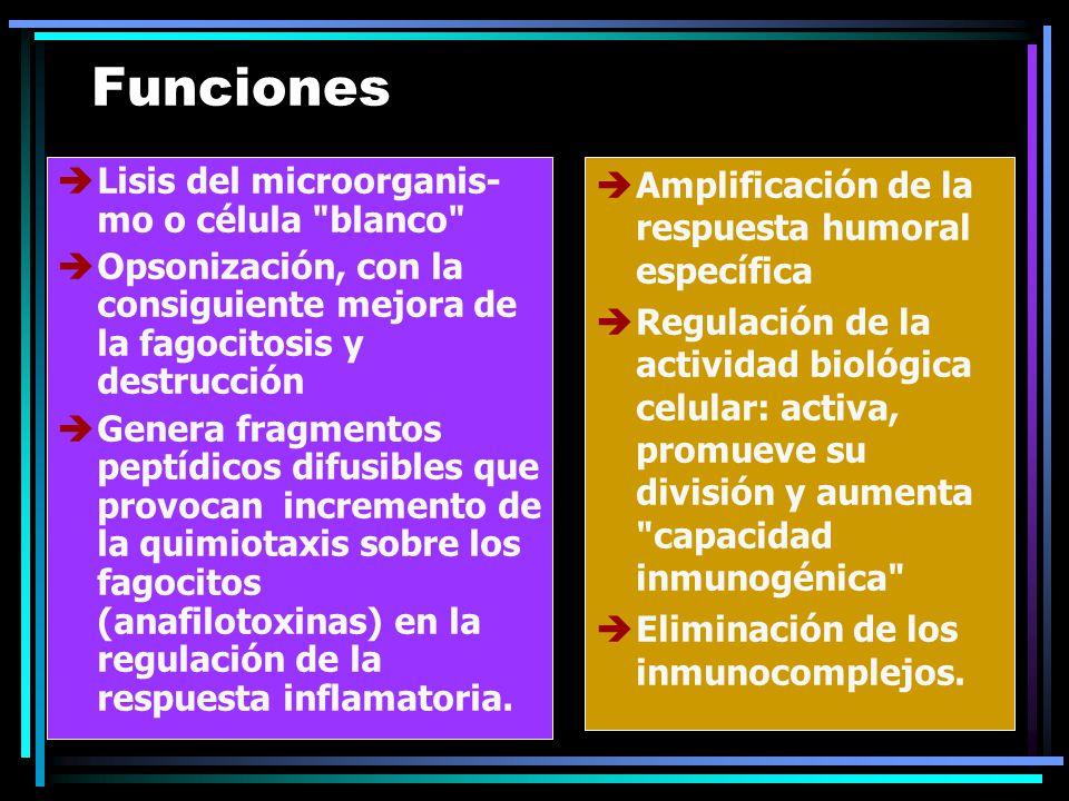 Funciones Lisis del microorganis- mo o célula blanco Opsonización, con la consiguiente mejora de la fagocitosis y destrucción Genera fragmentos peptídicos difusibles que provocan incremento de la quimiotaxis sobre los fagocitos (anafilotoxinas) en la regulación de la respuesta inflamatoria.
