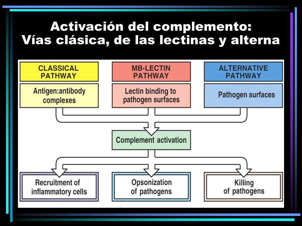 Activación del complemento: Vías clásica, de las lectinas y alterna