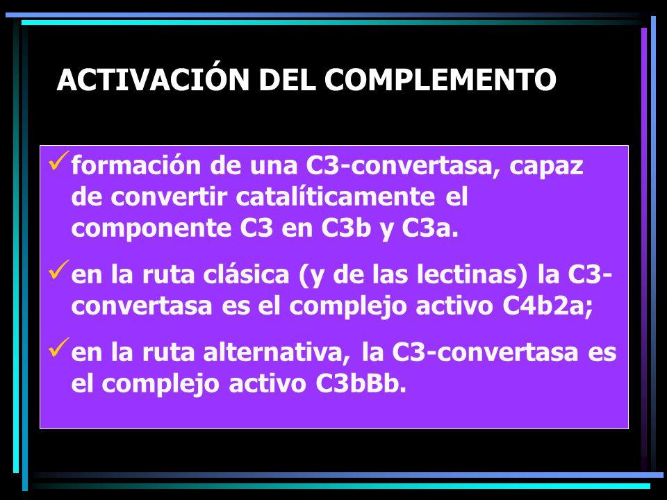 ACTIVACIÓN DEL COMPLEMENTO formación de una C3-convertasa, capaz de convertir catalíticamente el componente C3 en C3b y C3a. en la ruta clásica (y de