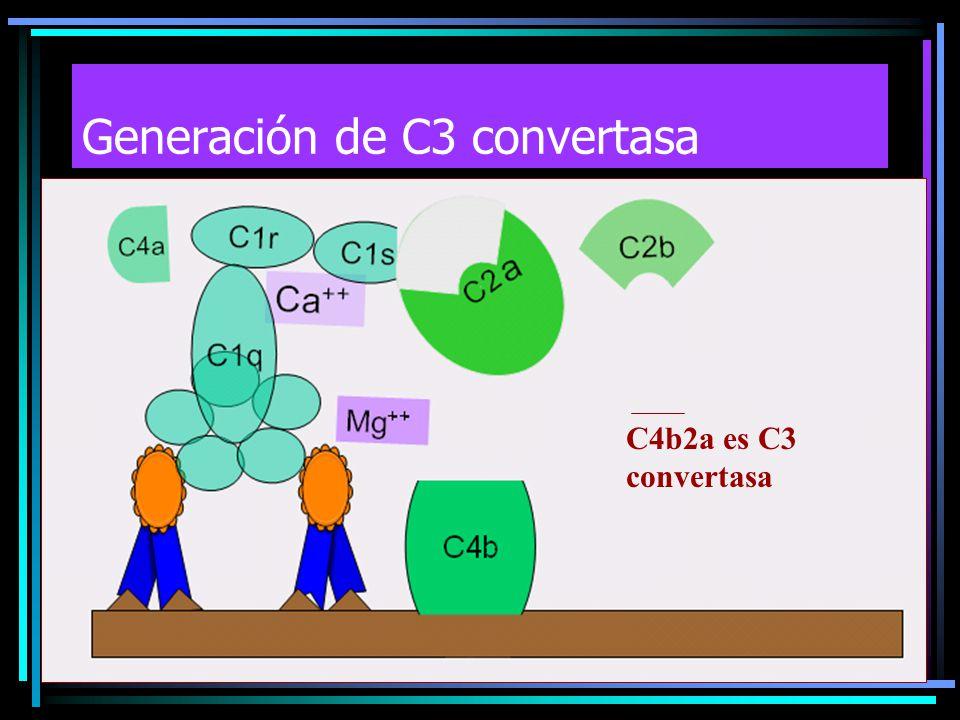 C4b2a es C3 convertasa