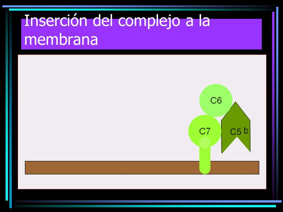 Inserción del complejo a la membrana