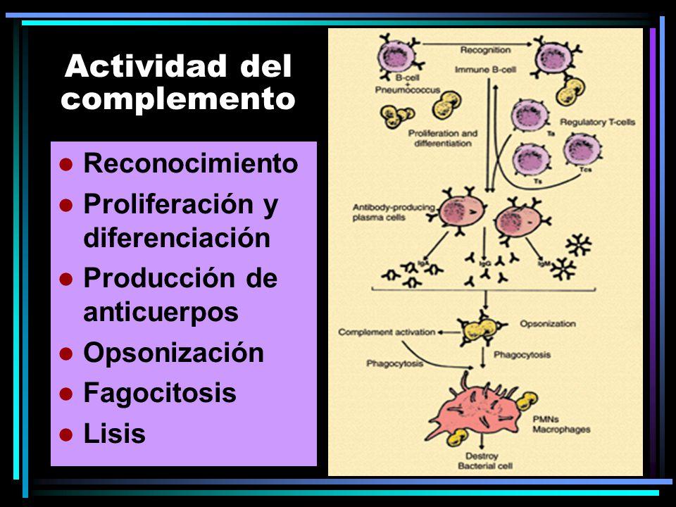 Actividad del complemento Reconocimiento Proliferación y diferenciación Producción de anticuerpos Opsonización Fagocitosis Lisis