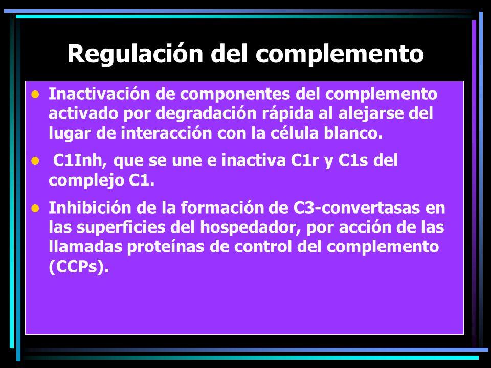 Regulación del complemento Inactivación de componentes del complemento activado por degradación rápida al alejarse del lugar de interacción con la cél