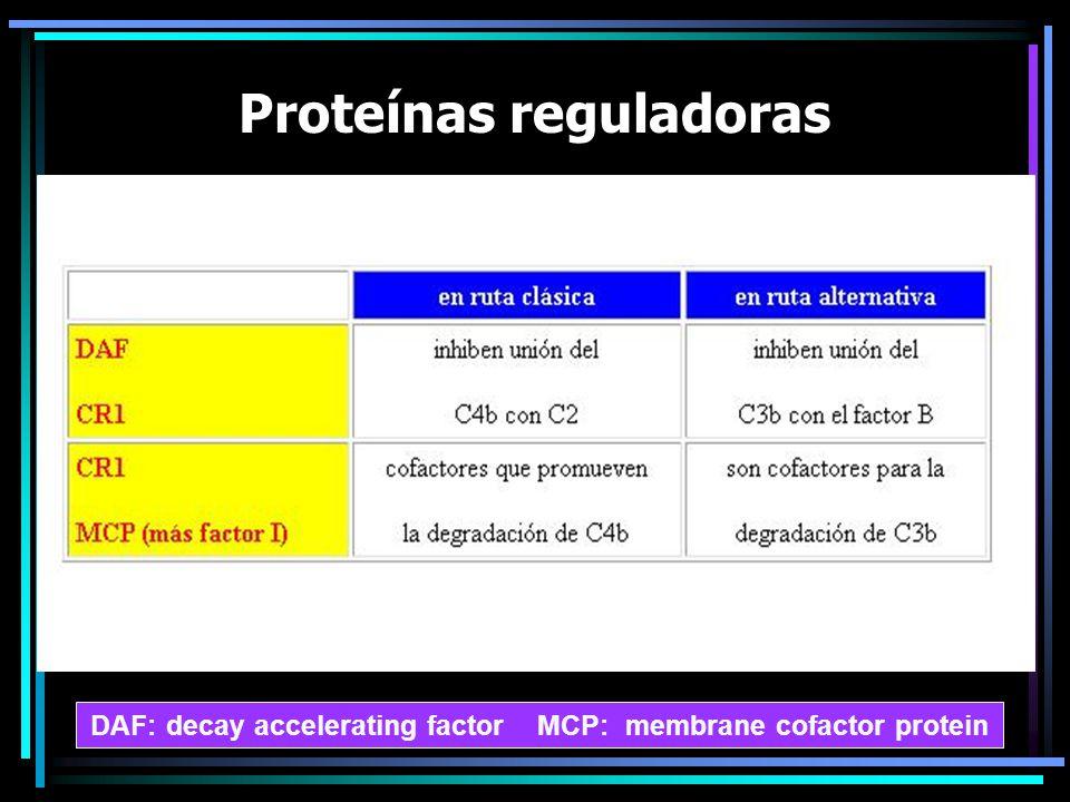 Proteínas reguladoras DAF: decay accelerating factor MCP: membrane cofactor protein