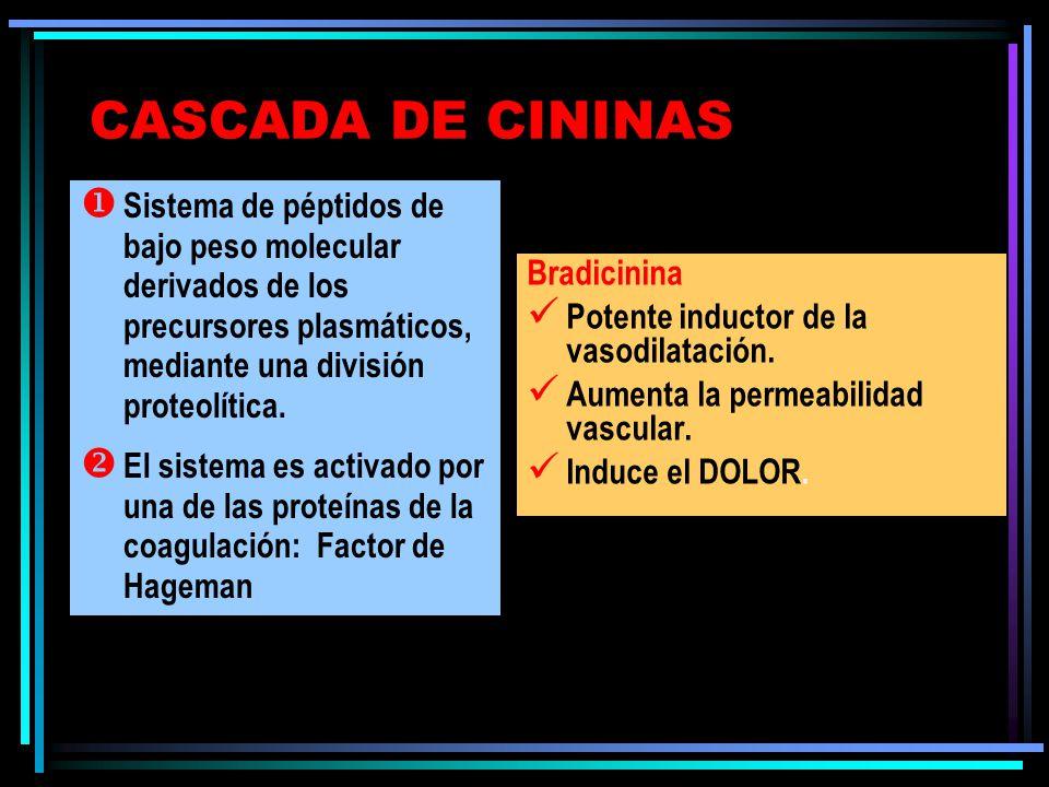 CASCADA DE CININAS Bradicinina Potente inductor de la vasodilatación. Aumenta la permeabilidad vascular. Induce el DOLOR. Sistema de péptidos de bajo