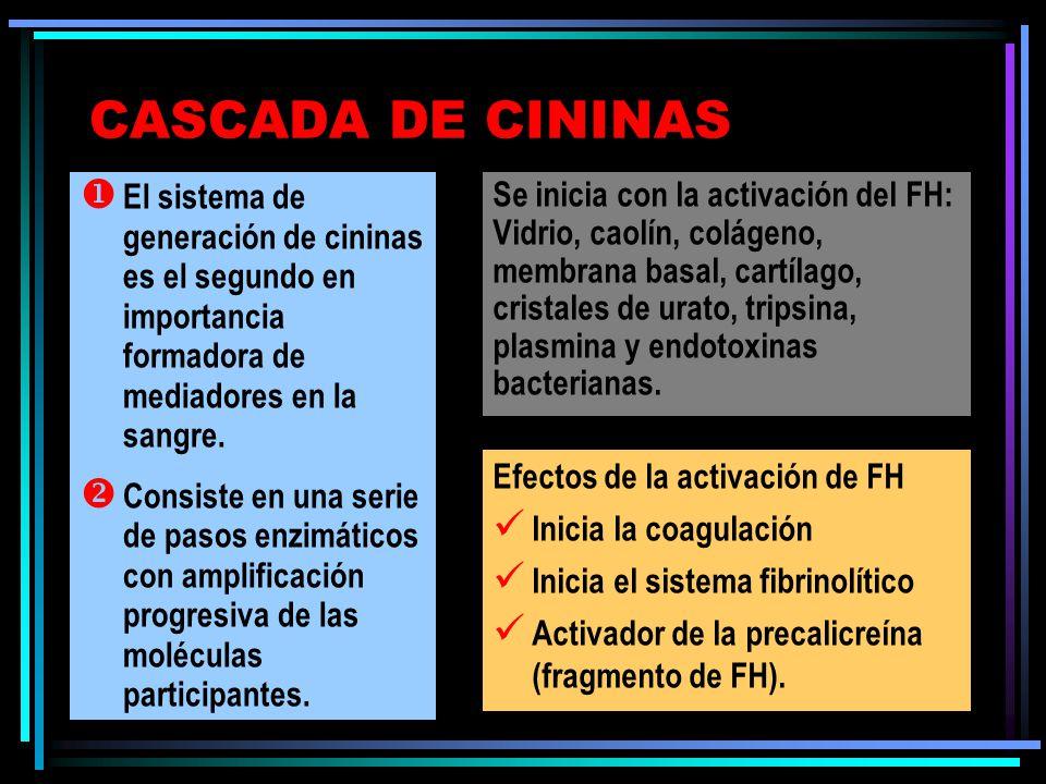 CASCADA DE CININAS Se inicia con la activación del FH: Vidrio, caolín, colágeno, membrana basal, cartílago, cristales de urato, tripsina, plasmina y endotoxinas bacterianas.