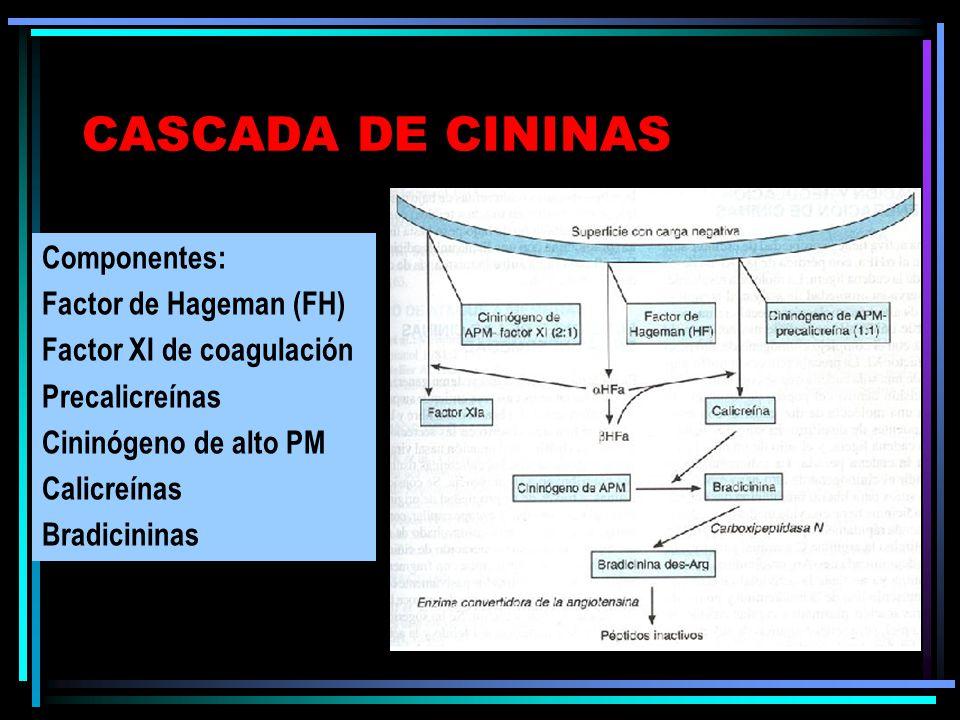 CASCADA DE CININAS Componentes: Factor de Hageman (FH) Factor XI de coagulación Precalicreínas Cininógeno de alto PM Calicreínas Bradicininas