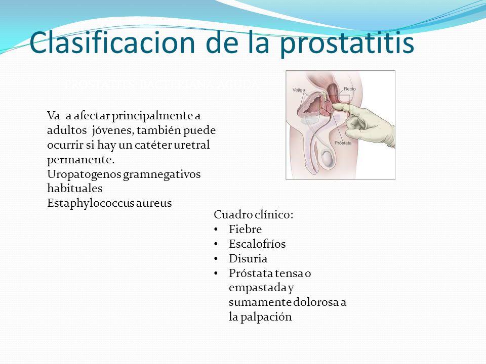 Clasificacion de la prostatitis PROSTATITS BACTERIANA AGUDA Va a afectar principalmente a adultos jóvenes, también puede ocurrir si hay un catéter ure