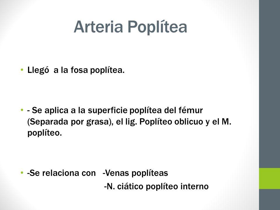 Arteria Poplítea Llegó a la fosa poplítea. - Se aplica a la superficie poplítea del fémur (Separada por grasa), el lig. Poplíteo oblicuo y el M. poplí