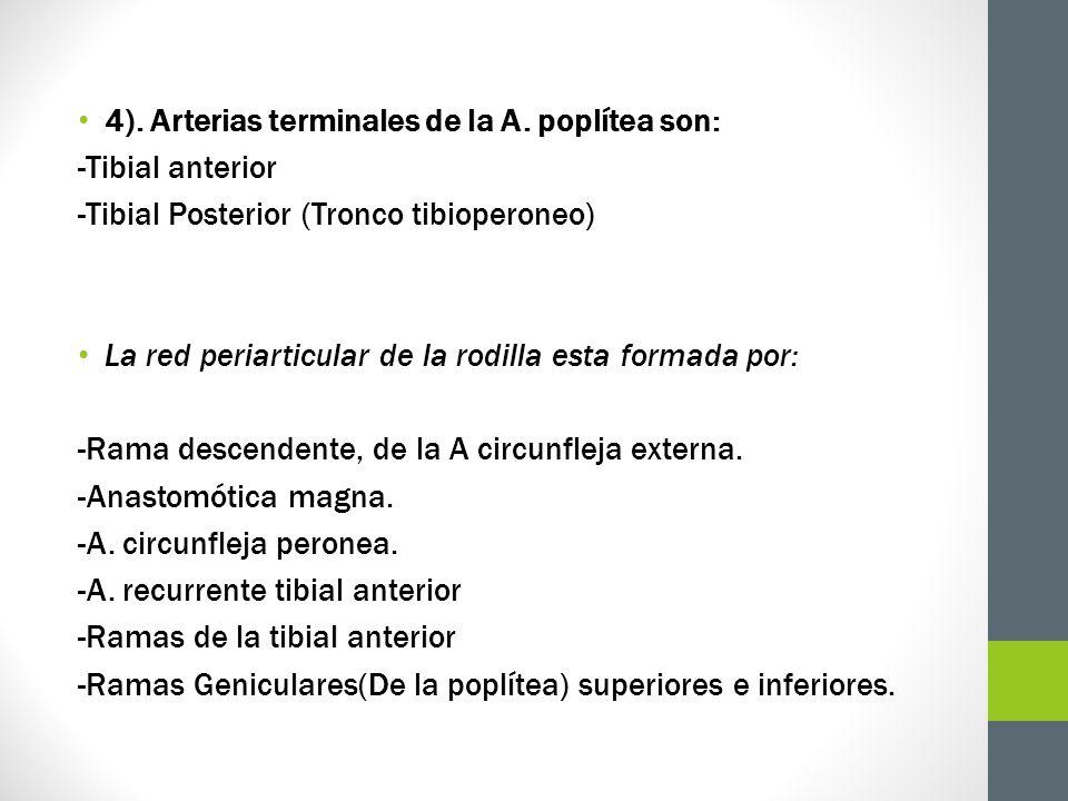 4). Arterias terminales de la A. poplítea son: -Tibial anterior -Tibial Posterior (Tronco tibioperoneo) La red periarticular de la rodilla esta formad