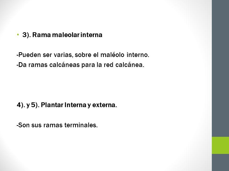 3). Rama maleolar interna -Pueden ser varias, sobre el maléolo interno. -Da ramas calcáneas para la red calcánea. 4). y 5). Plantar Interna y externa.