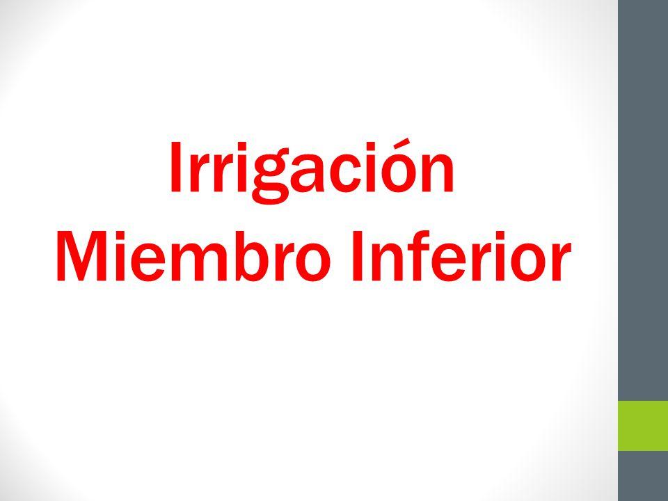 Irrigación Miembro Inferior