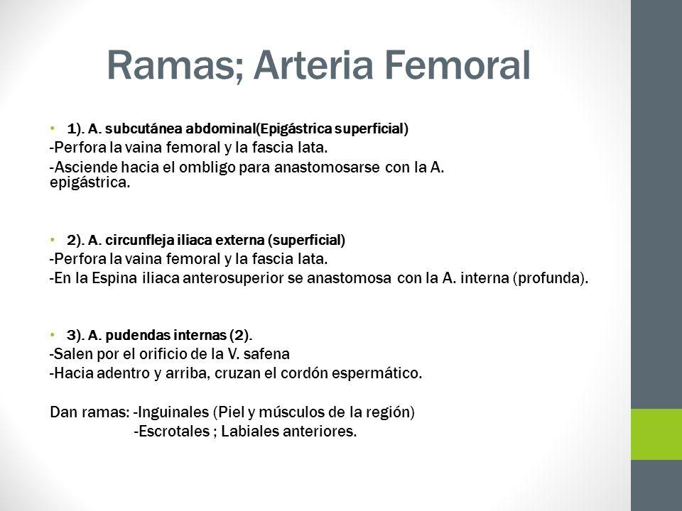 Ramas; Arteria Femoral 1). A. subcutánea abdominal(Epigástrica superficial) -Perfora la vaina femoral y la fascia lata. -Asciende hacia el ombligo par