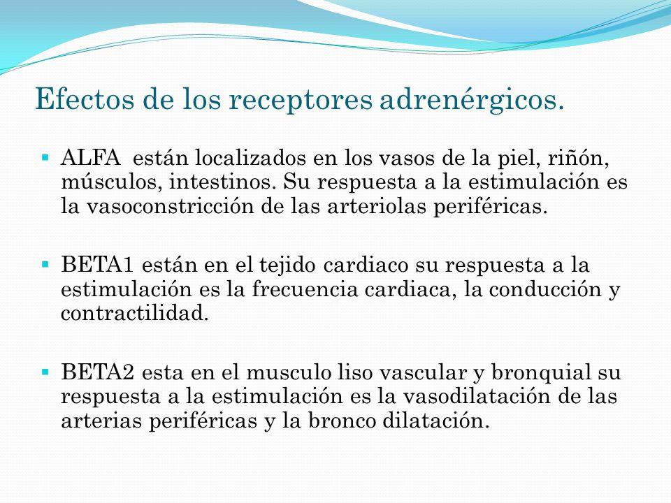 Efectos de los receptores adrenérgicos. ALFA están localizados en los vasos de la piel, riñón, músculos, intestinos. Su respuesta a la estimulación es
