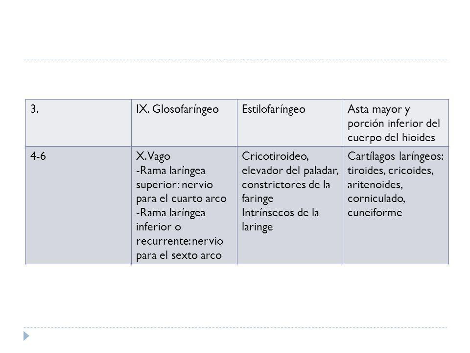 3.IX. GlosofaríngeoEstilofaríngeoAsta mayor y porción inferior del cuerpo del hioides 4-6X. Vago -Rama laríngea superior: nervio para el cuarto arco -